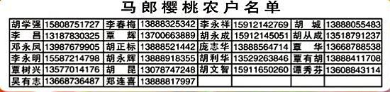 阳宗海马朗5000余亩樱桃成熟 购买超过5公斤免入园费重庆巴蜀中学校草